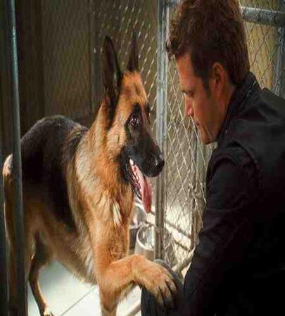 پشت صحنه فیلم 2010 Cats & Dogs